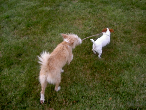 Dogs_stick_1